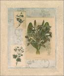 Histoire Du Orchid VII
