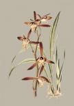 Botanical Cabinet VII