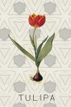 Tulipa - Anne Waltz