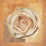 Warm Rose II
