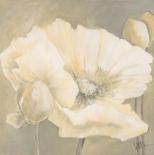 Poppy in white II