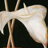 Lily in sepia II - Beate Emanuel