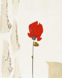 La petite rose rouge