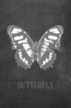 Butterfly Gris - Anne Waltz