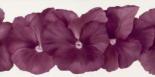 Violet Flower III