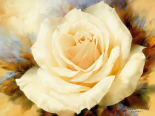 One Champagne Rose