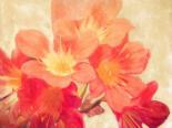Sun Fire Florals