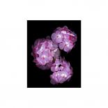 Botanical Harmonies II