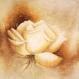 White rose I - Betty Jansma