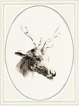 Deer I - Anne Waltz