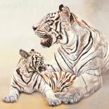 Tigres blancs, möre et fille
