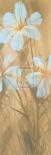 White Hibiscus I