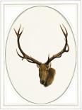 Deer II - Anne Waltz