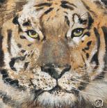 Tiger - Yuliya Volynets