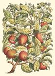 Apple Tree Branch
