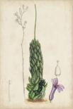 Antique Cactus IV