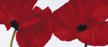 Red II (poppies)