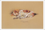 Judy, A Spaniel Puppy