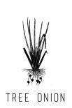 Tree Onion - Anne Waltz