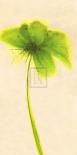 Floral Burst VII