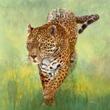 Kalina, le Jaguar