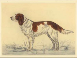 Hunting Dogs-Spaniel