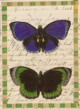 Butterfly Collage, Runaway