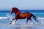 Beach - beautiful horse