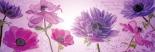 Flowers in purple