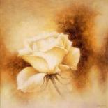 White Rose II - Betty Jansma
