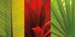 Tropical Treasure II