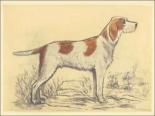 Hunting Dogs-Griffon