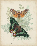 Butterflies and Ferns I