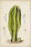 Antique Cactus VI