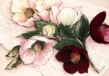 Elegant Anemones