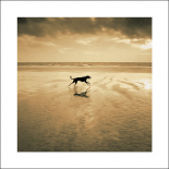 Dog on the Beach, West Wittering