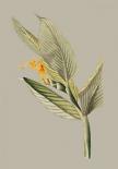Botanical Cabinet III