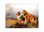 Collies in a Highland Landscape