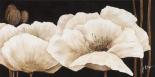 Amazing poppies IV