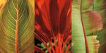 Tropical Treasure I