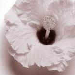 Blossom [Four]