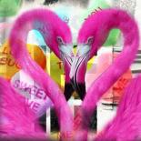 Flamingo - Mascha de Haas