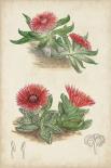 Antique Cactus V