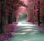 Forest Blush