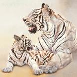 Tigres blancs, m�re et fille