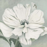 White poppy - Franz Heigl
