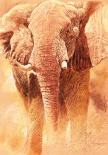 Elefant Study