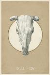 Skull - Anne Waltz