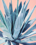 Agave with Coral