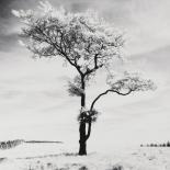 Lone Tree # 3, Peak District, England